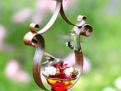 Como Hummingbird Feeder