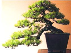 Tips om Bonsai te maken