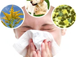 Air Purifiers Can Be Beneficial For People With Allergies