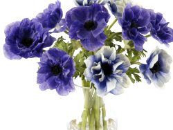 Arrangements blue flowers